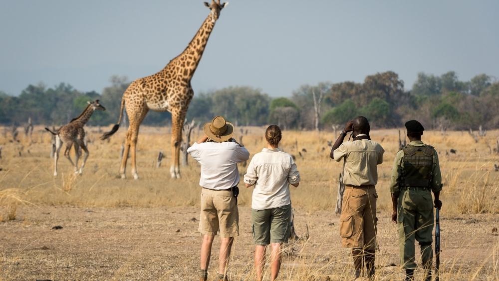 luangwa-trail-robin-pope-safaris