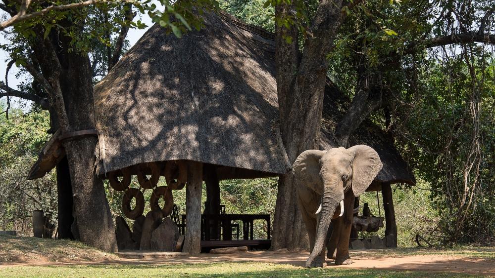 nkwali-robin-pope-safaris